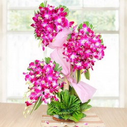 Orchid Charming