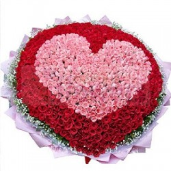 Say I Love You with 500 Roses