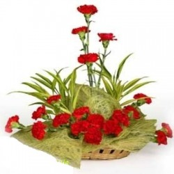 Arrangement of carnation