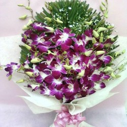 Stem Purple Orchids