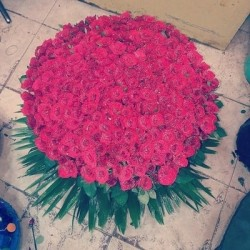 Unfathomable love ( 350 Roses)